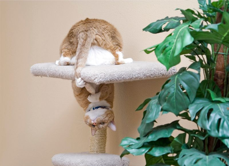 Cat sitting upside down on cat tower.